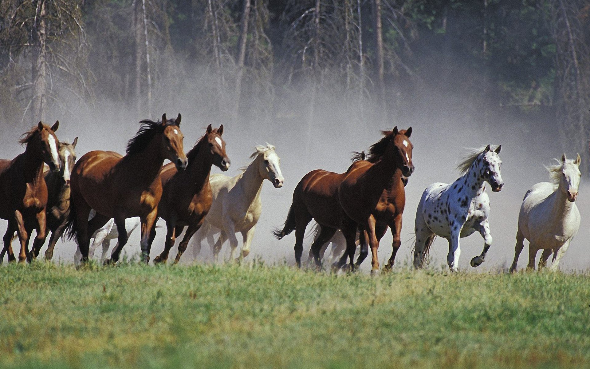 Great Wallpaper Horse Country - running-horse-picture_109523-1920x1200  Perfect Image Reference_809524.jpg